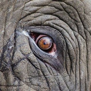 Joke of the Day-What do you get when you cross an elephant with a