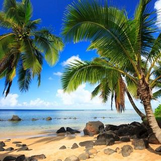 1. Oceania o Stati Uniti - Le Hawaii