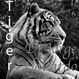 12 - Tiger (Club Mix)