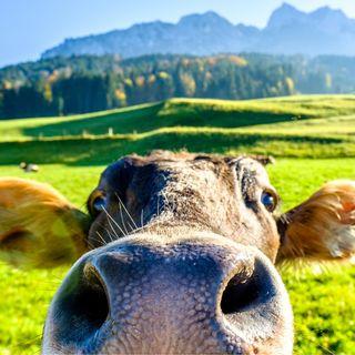 Il Latte fa bene? | Natura & Benessere con Manuela Micucci | Live