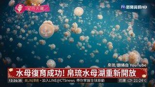 14:14 水母復育成功! 帛琉水母湖重新開放 ( 2019-02-05 )