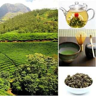 Storia e varianti del tè - La bevanda più bevuta al mondo
