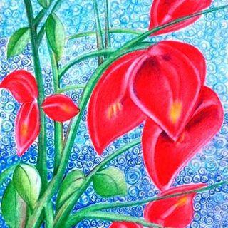 Flor de ceibo - Cuento Infantil