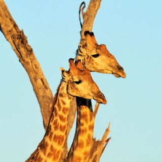 Afrika'da Safari'de Bir Gün