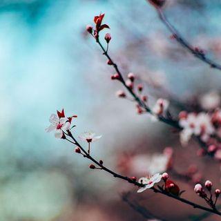 Cultiva la paz y florece en la fe