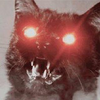 The Kitten Kong Halloween Show.