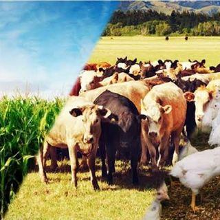 PodGeo - Sistemas Agrícolas