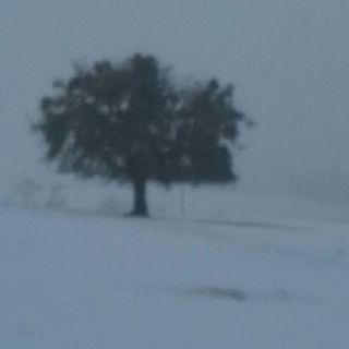 Paul Vens & Friends - Kastanjeboom Verhalen - De Winter (30 min.)