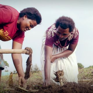 The seeds of change helping African farmers grow out of poverty | Andrew Youn