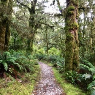 How to walk the Milford Track podcast
