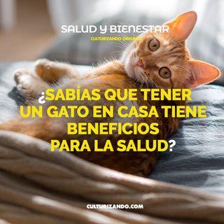 ¿Sabías que tener un gato en casa tiene beneficios para la salud? • Salud y Bienestar - Culturizando