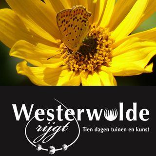 Ddvm 20-06-19 Westerwolde rijgt