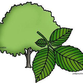 La clase de 2º B nos habla sobre las plantas