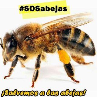 Reportaje extinción de las abejas