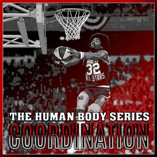 Coordination (The Human Body Series)