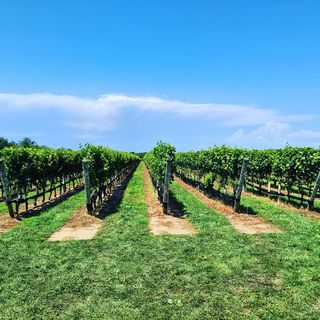 Long Island Wine Country: The North Fork