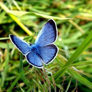 52: Butterfly