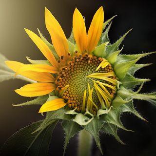 Jak Kwiaty na Wiosnę