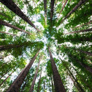 Cerignale, il sindaco di un milione di alberi ospite a RN1