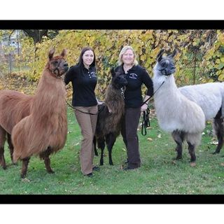 Mtn Peaks Therapy Llamas & Alpacas - Interview with Lori Gregory
