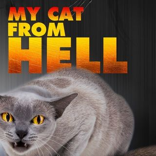 Jackson Gallaxy From Animal Planets My Cat From Hell