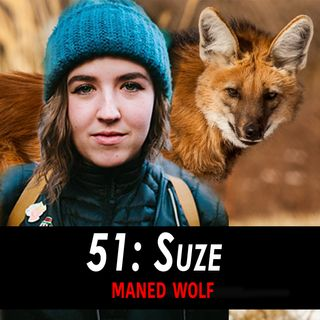 51 - Suze the Maned Wolf