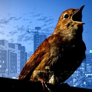 Race and disease risk and Berlin's singing nightingales