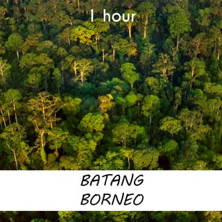 Batang Borneo | 1 hour FOREST Sound Podcast | White Noise | ASMR sounds for deep Sleep | Relax | Meditation | Colicky