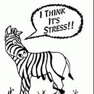 Coping With Stress - Staying Sane Throug