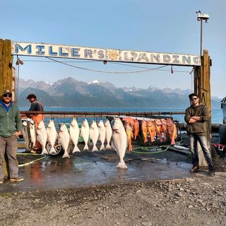Justin Carpentar - Fishing Report From Alaska