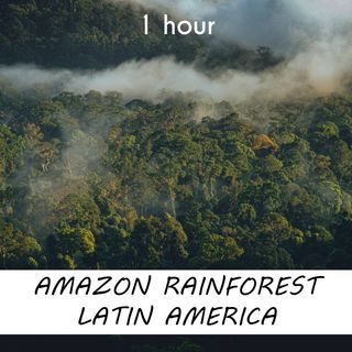 Amazon Rainforest Latin America | 1 hour FOREST Sound Podcast | White Noise | ASMR sounds for deep Sleep | Relax | Meditation | Colicky