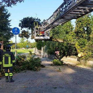 """Vento sul Vicentino: alberi e pali della luce """"pericolanti"""". Una manciata di richieste al 115"""