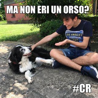 #cr Conoscere un orso in vacanza