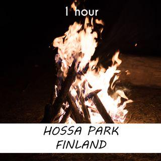 Hossa National Park, Finland | 1 hour CAMPFIRE Sound Podcast | White Noise | ASMR sounds for deep Sleep | Relax | Meditation | Colicky