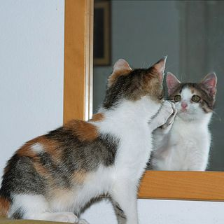 The Kitten Kong Radio Show 764: Face To Face