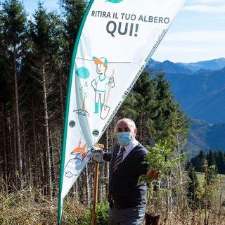 Pam Panorama: donati 600 alberi per la rinascita dei boschi di Asiago