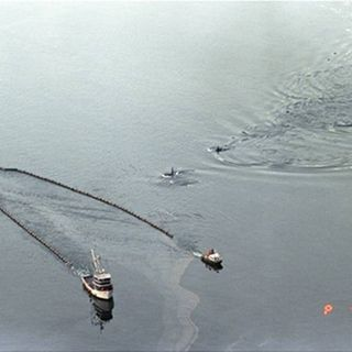 Scientists Remember Exxon Valdez 25 Years Later