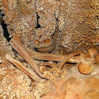 The Cave Man of Altamura