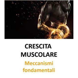 Crescita muscolare: meccanismi fondamentali