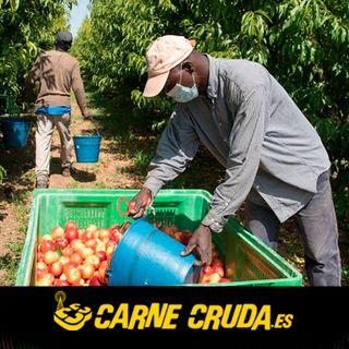 Carne Cruda - Temporeros: esclavos en España (#726)