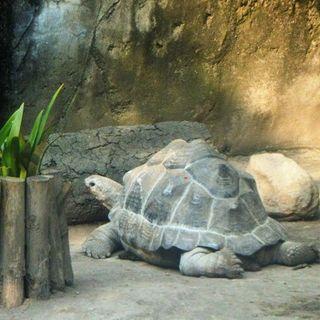 Que Bonito: Zoológico pierde Tortuga gigante