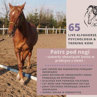 Live 65: Patrz pod nogi czyli Czwarty obowiązek konia - z ziemi