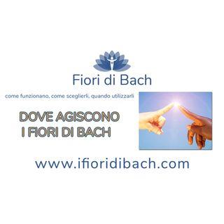 04-dove-agiscono-fiori-di-bach