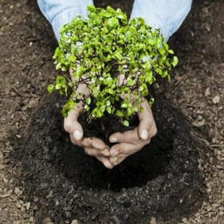 Arranca plan de reforestación en la CDMX