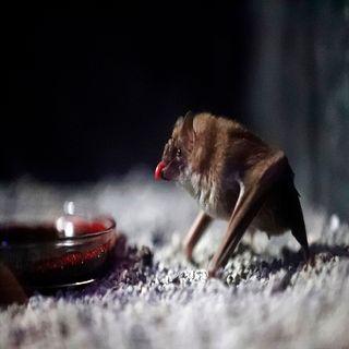 Tipos de Vampiros