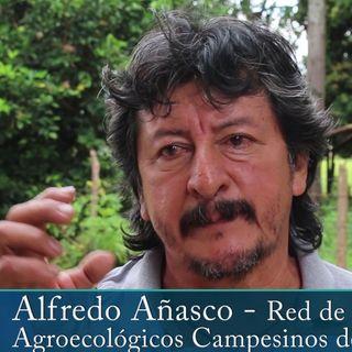 Experiencias con Alfredo Añasco