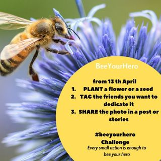 #42 - Bee Your Hero Challenge: pianta un fiore e salva un'ape! Cos'è e come partecipare