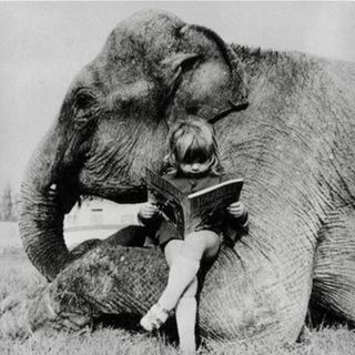 La storia dell'Elefante e dei figli cechi del proprietario che lo lavarono.