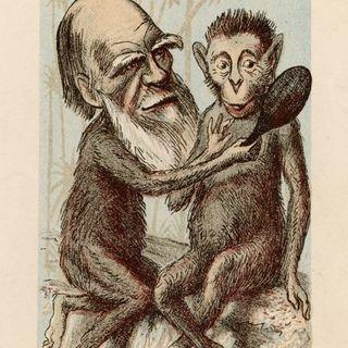 Darwin è femmina