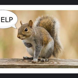 Hva om noen gikk hver dag og spiste levende ekorn?